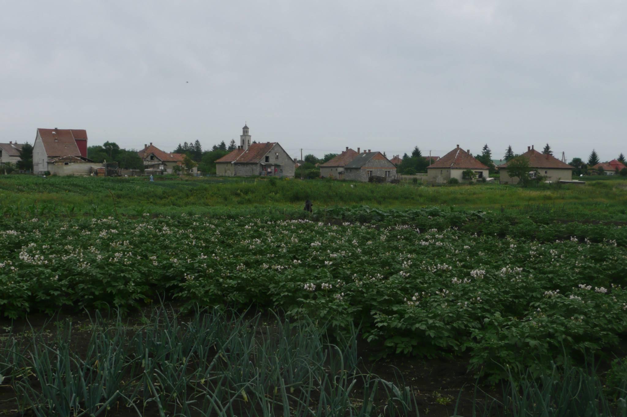 farm pachten in ungarn